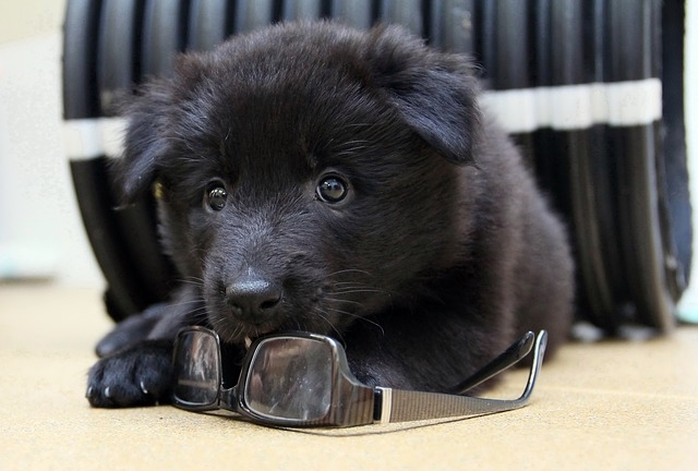 メガネと犬